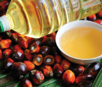 The whole truth about palm oil