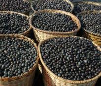 Controversial acai berries