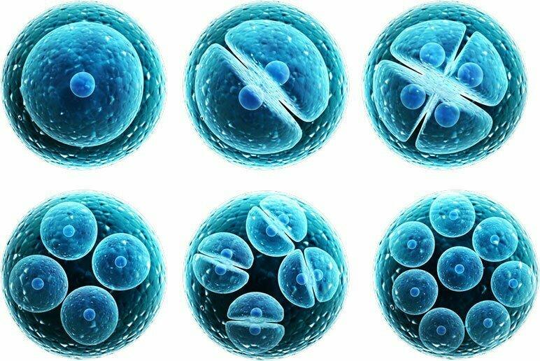 Quelle der Stammzellen