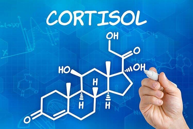 Cortisol, stress et obésité