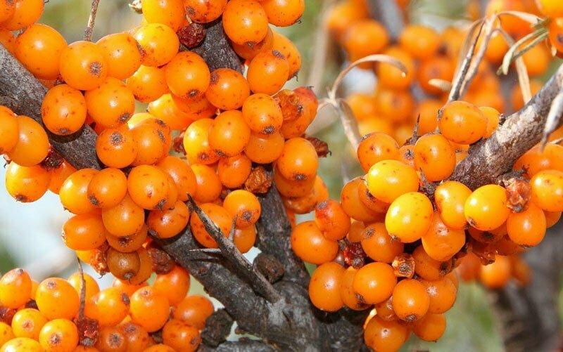 Starke Antioxidantien gegen freie Radikale