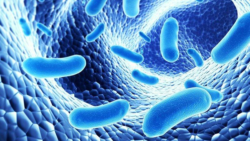 Probiotiká – dobré baktérie