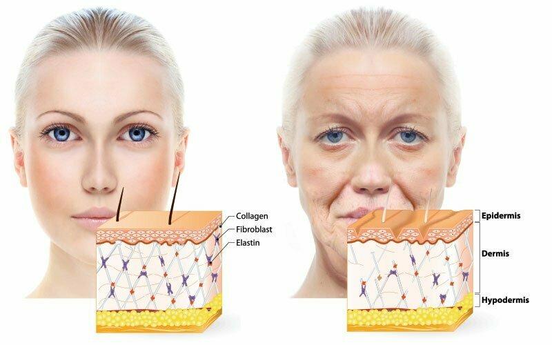 Prehrana starenja kože
