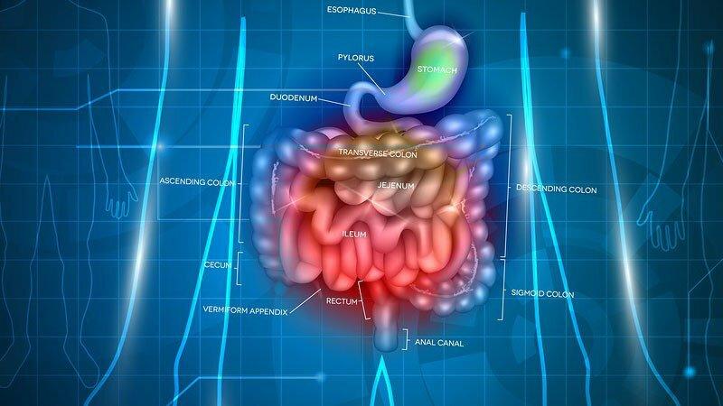 Існує прямий зв'язок між кишечником і мозком