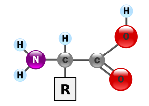 Aminozuren in Laminine